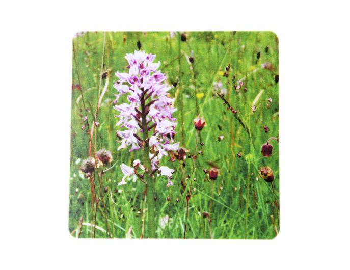 Underlägg: Öland – Orkidé, blomsteräng